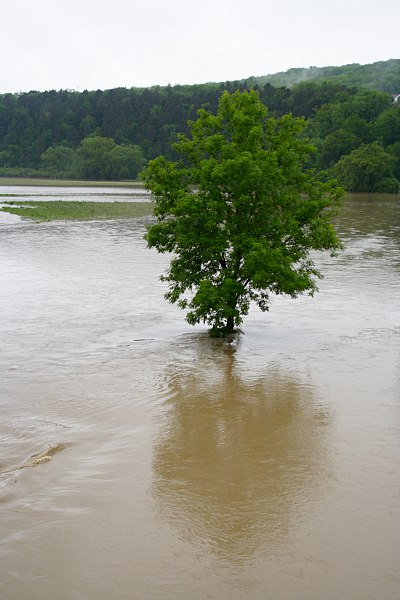 tree in the floodwater