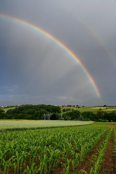 Regenbogen über einem Maisfeld