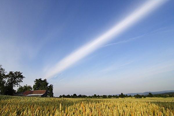 Wolke über gelbem Getreidefeld