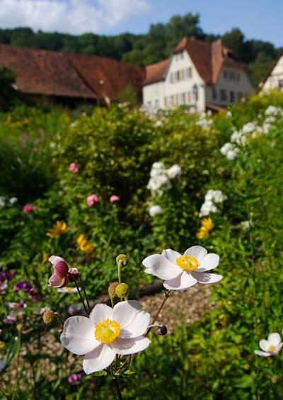 flowers in a garden in Bebenhausen