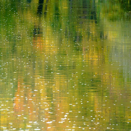 colourful autumn foliage mirrors on Neckar river