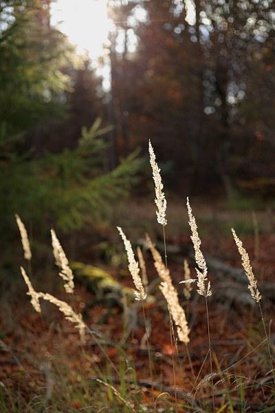 Gräser im Wald im Gegenlicht