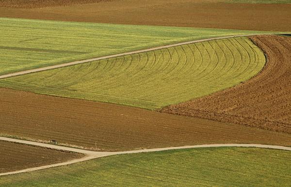 Felder mit Wintergetreidesaat und Feldwege