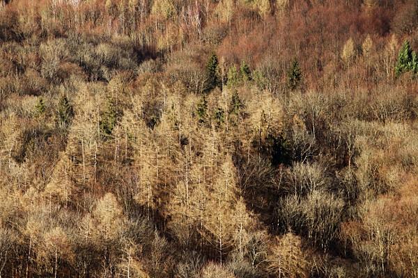 Blick auf den kahlen Wald im Winter.