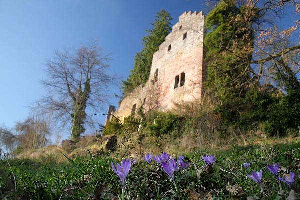Zavelstein castle ruin