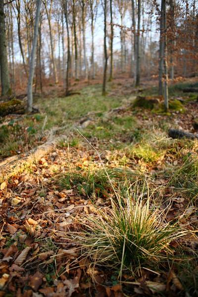 Grasbüschel im Wald