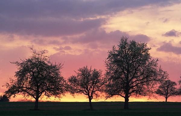 Abendrot Streuobstwiese (Sonnenuntergang Obstbäume) nahe Häslach