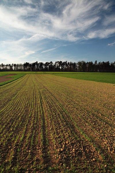 fields at the edge of Schönbuch forest