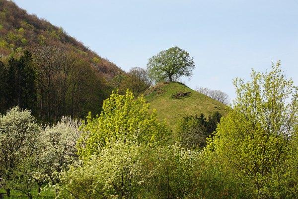 Der Calverbühl bei Dettingen im Frühjahr, im Vordergrund blühende Ahorn- und Obstböume