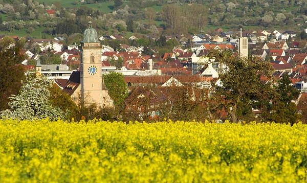 Blick über ein Rapsfeld auf die Nürtinger Stadtkirche