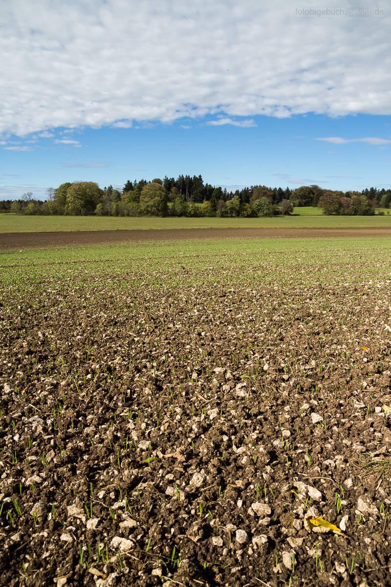 stony field on the Schwäbische Alb