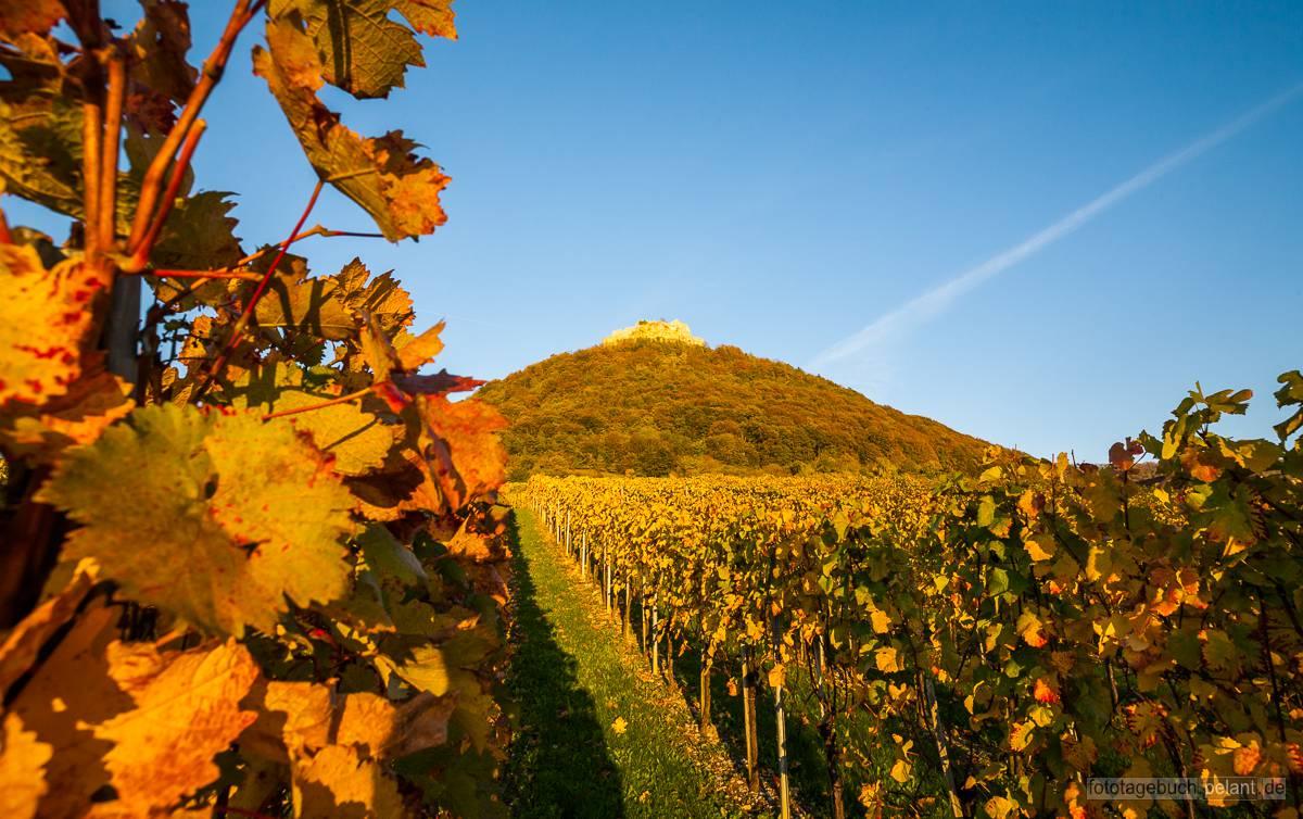 Burgruine Hohenneuffen und die Weinberge am Fuß des Berges im Abendlicht