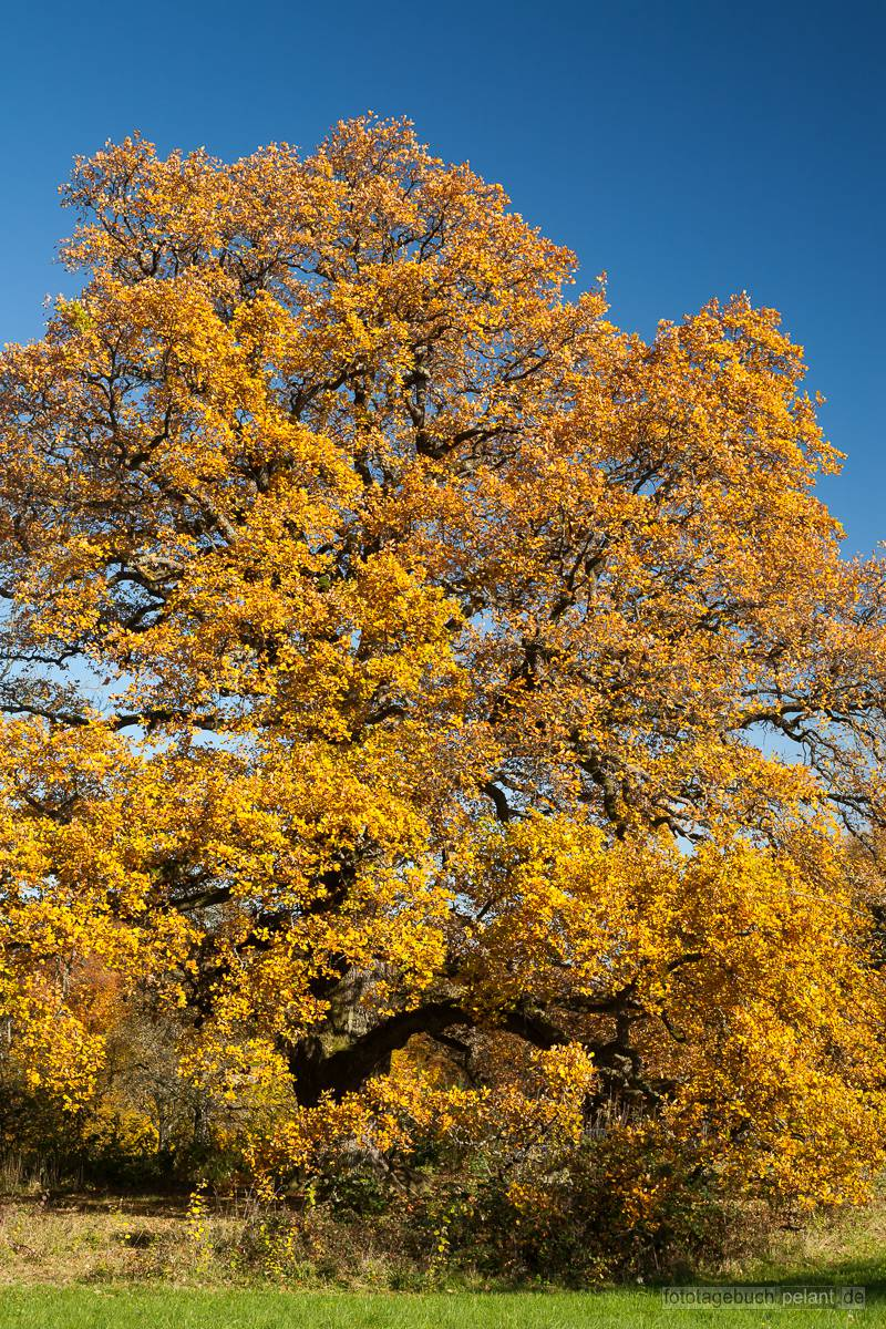 Herbstliche Sulzeiche Fototagebuch