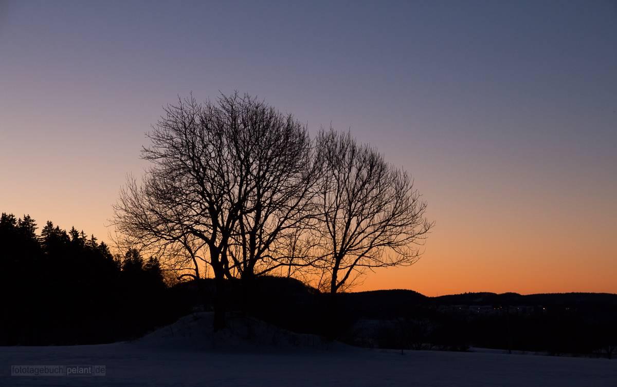 Morgenröte und Silhouette von zwei Bäumen auf der Schwäbischen Alb