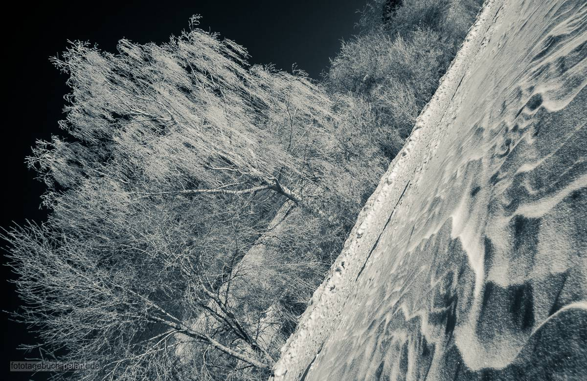 Schnee und Bäume