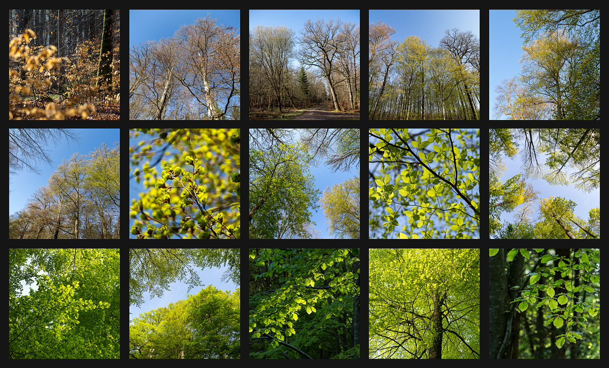 selection of images showing new leaves in the Schönbuch forest in spring