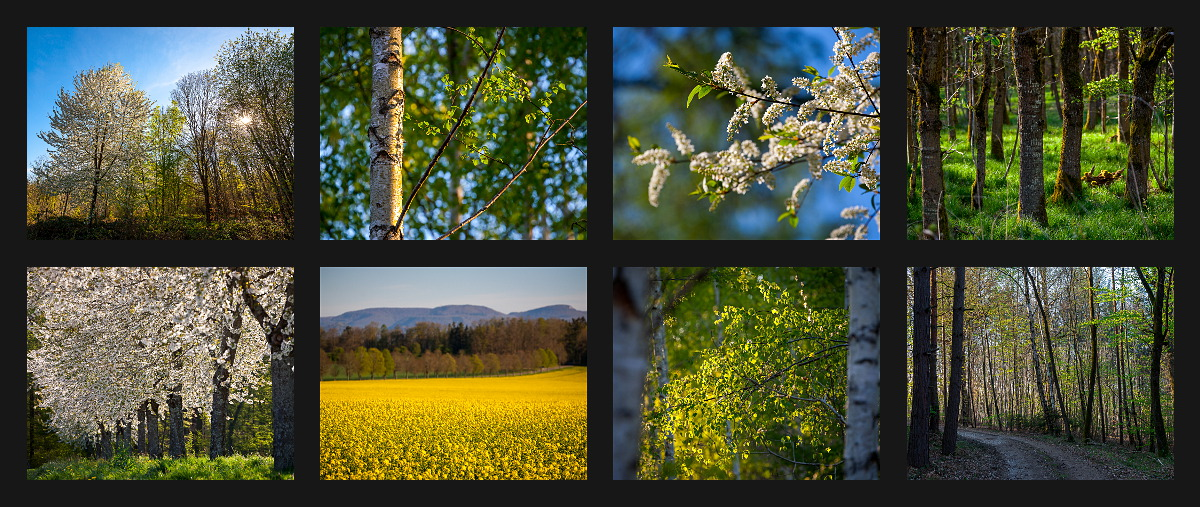 spring in and around the Schönbuch forest