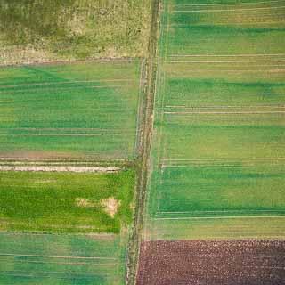 Luftbild von Feldern im Winter mit Wintergetreide