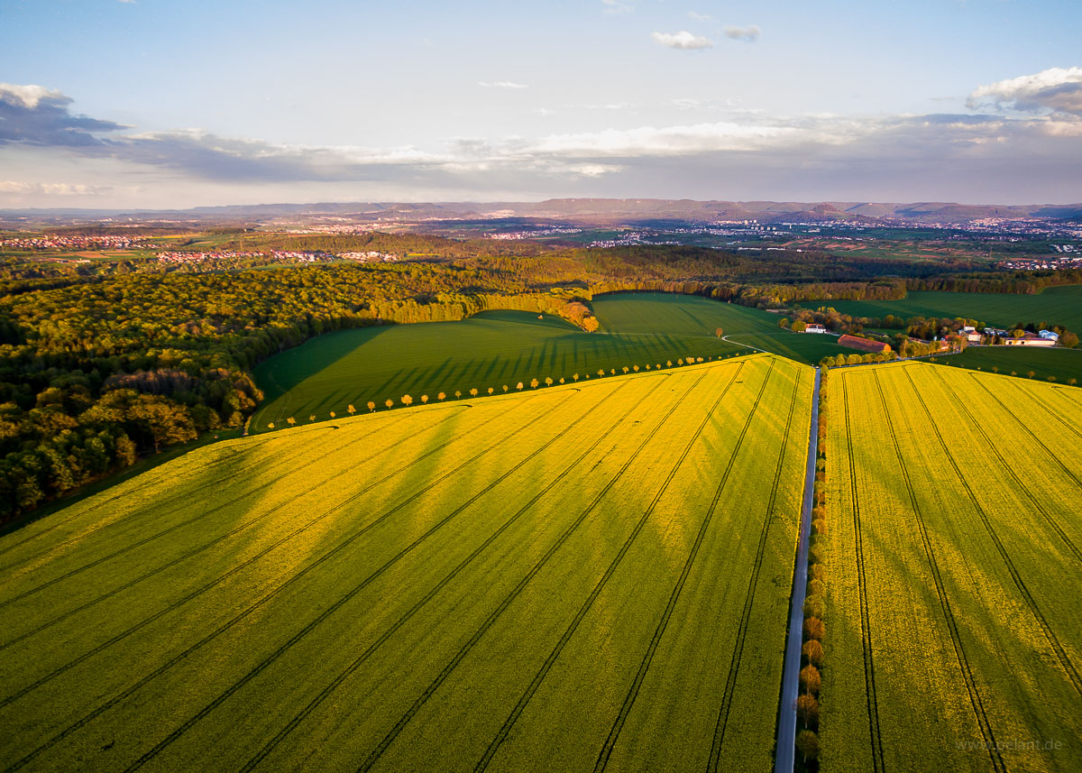 aerial view of flowering rapeseed fields of Einsiedel (Tübingen) in the evening light with long shadows of trees