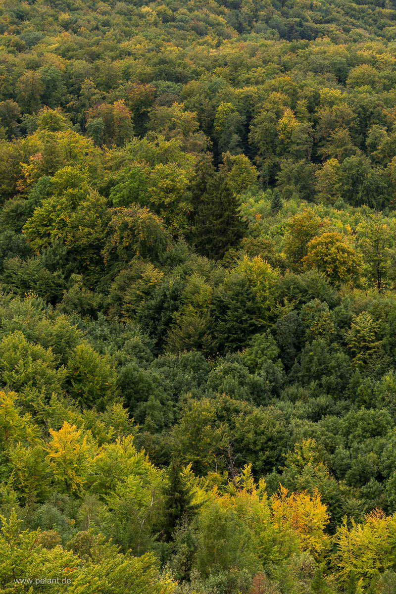 view from the Hirschkopf over the early autumn forest near Mössingen