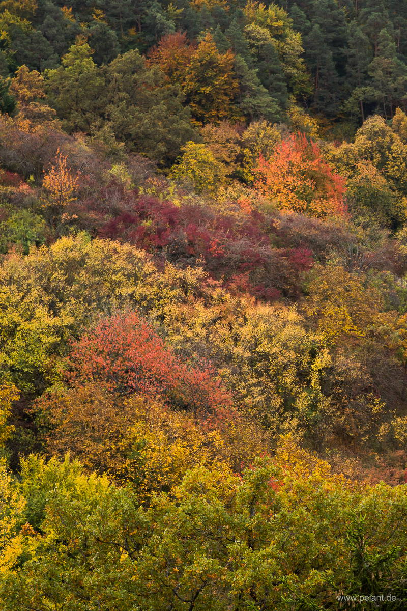 colourful autumn forest at the edge of the Schönbuch forest near Entringen