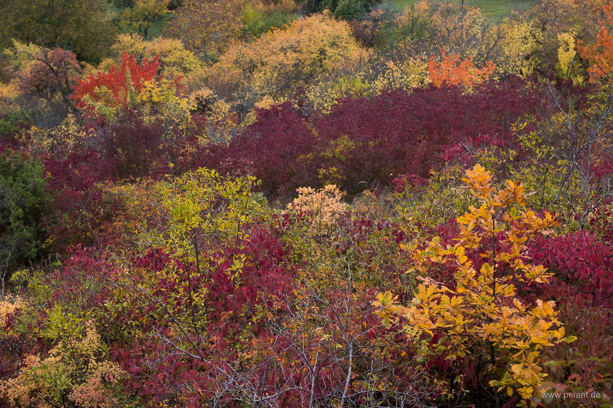 colourful shrubbery at the Southwestern edge of the Schönbuch forest in autumn