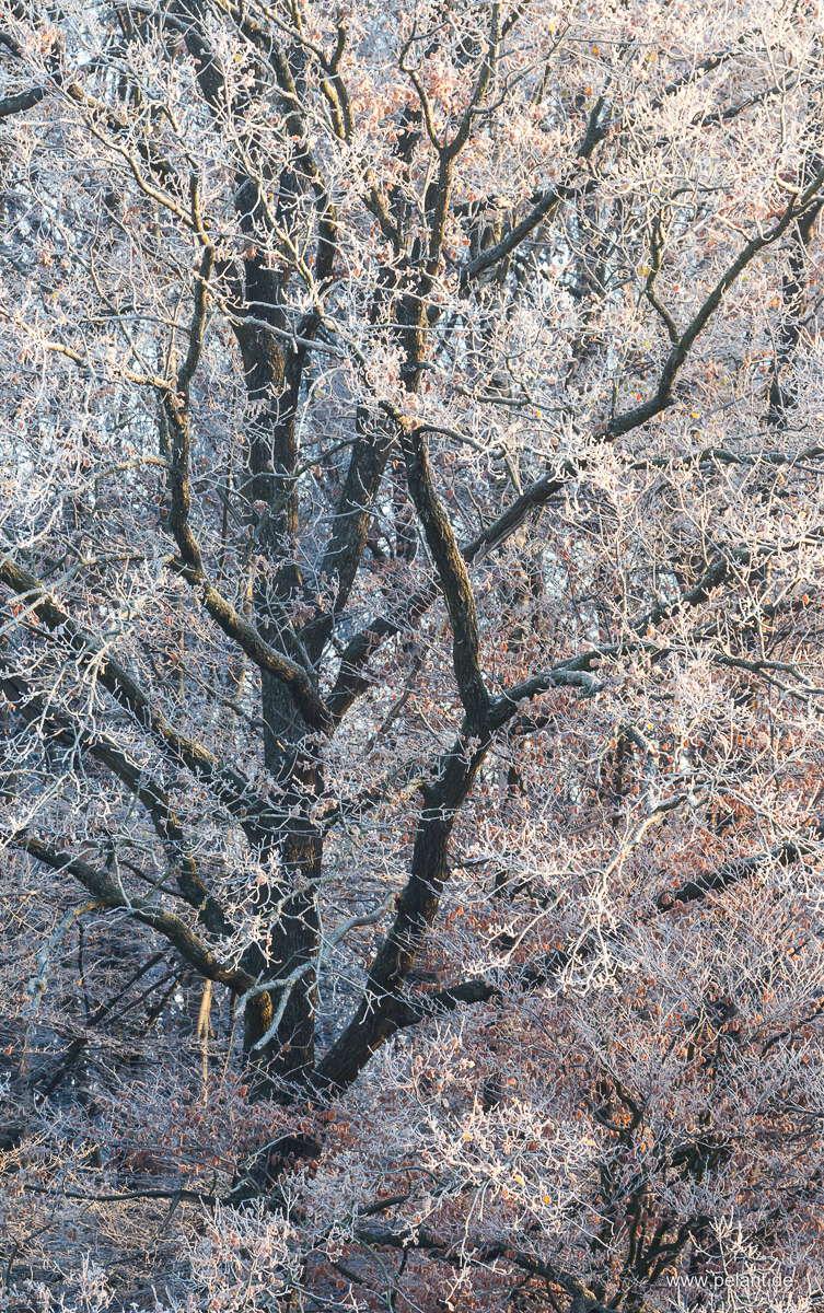 Baum mit Reif am Schönbuchrand