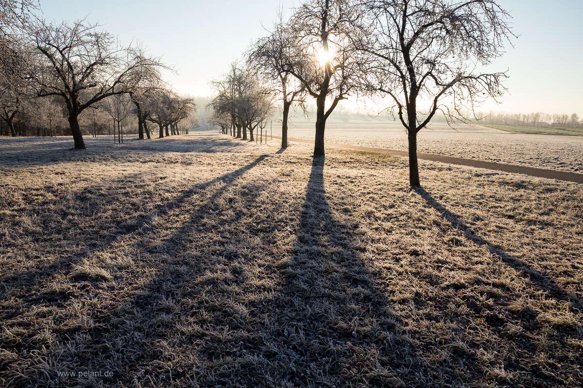 Streuobstwiese am Schönbuchrand mit Reif an einem Wintermorgen