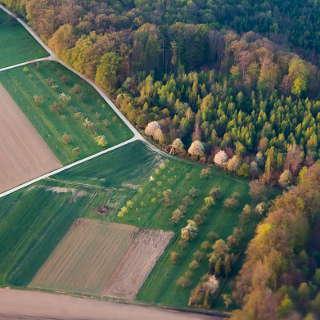 Luftaufnahme von Streuobstwiesen am Waldrand bei Stetten im Frühjahr