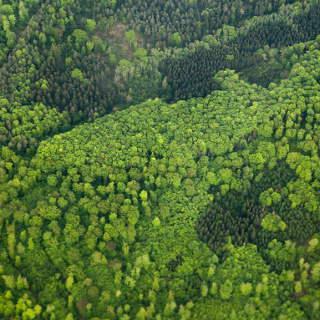 Wald im Frühjahr aus der Luft
