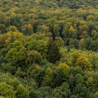Blick vom Hirschkopf über den sich zu verfärben beginnenden Wald am Heuberg (Mössingen)