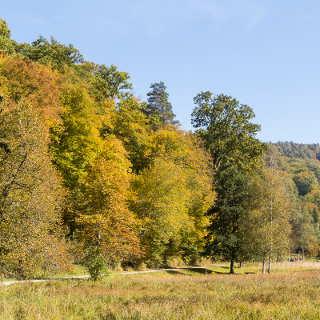 Herbst im Großen Goldersbachtal bei dem Soldatengrab im Schönbuch