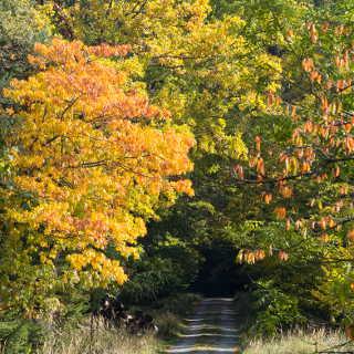 Buntes Herbstlaub auf dem Bromberg im Schönbuch