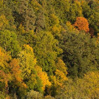 Herbstwald im Schönbuch bei Bebenhausen