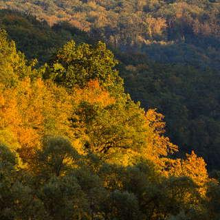 Herbstwald im Goldersbachtal im Abendlicht