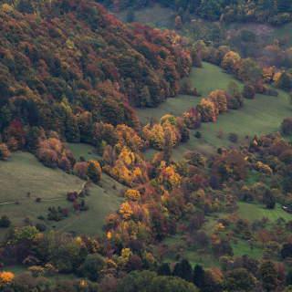 Herbstwald am Albtrauf