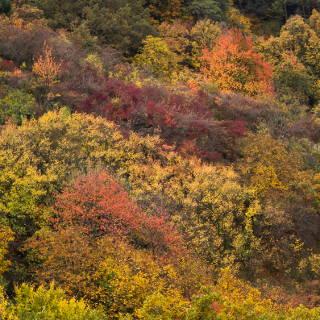 Farbenfroher Herbstwald am Rande des Schönbuchs bei Entringen