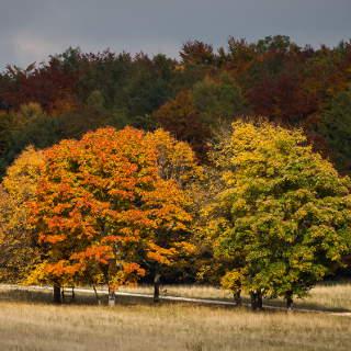 Herbstlich verfärbte Baumgruppe auf dem Rossberg (Glems)
