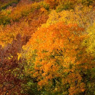 Blick vom Wiesfels bei Glems über den Herbstwald am Albtrauf