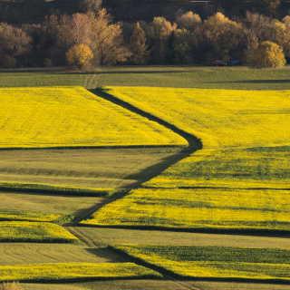 Felder im Neckartal