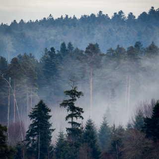Neblige Winterstimmung im Schwarzwald
