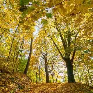 Weg auf den Metzinger Weinberg im Herbst