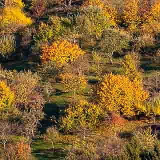 Streuobstwiese bei Metzingen im Herbst