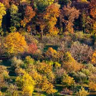 Herbstliche Streuobstwiese