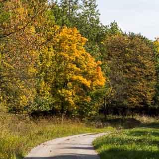 Spitzahorn (Acer platanoides) in beginnender Herbstfärbung am Eichenfirst-Randweg (Waldweg) im Naturpark Schönbuch