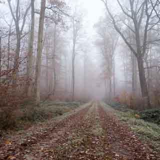 Ersatzweg beim Eichenfirst im Schönbuch - Waldweg mit Nebel im November