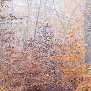 Herbstliches Buchenlaub in verschiedenen Farbtönen