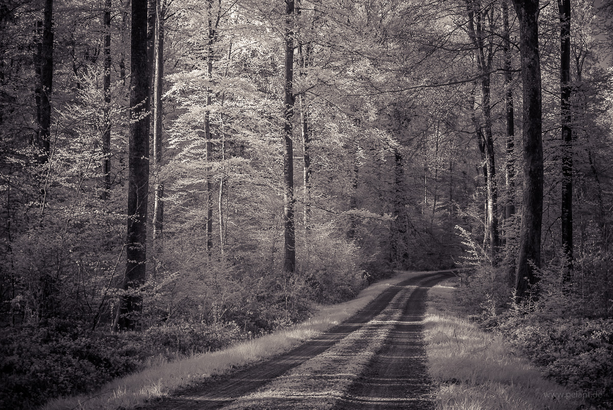 track in the Schönbuch forest, infrared image