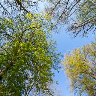 trees are getting green in the spring forest, seen from frog perspective