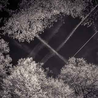 infrared photograph of contrails over the spring forest